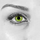 Detaljerat slut för grönt öga för kvinna upp Arkivfoton