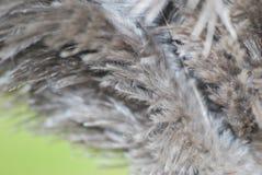 Detaljerat slut för strutsfjädrar upp fotografering för bildbyråer