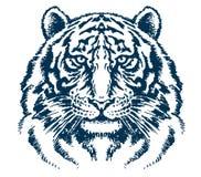 Detaljerat tigerhuvud Arkivfoto