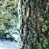 Detaljerat träd Arkivbilder