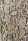 Detaljskäll av trädtextur Arkivbild