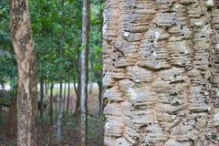 Detaljskäll av trädtextur med skogbakgrund Fotografering för Bildbyråer