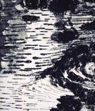 Detalle abstracto de la corteza de abedul Imagenes de archivo