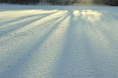Detalle abstracto de la nieve, modelo Líneas rectas de sombras largas azules de árboles en la nieve fresca sin tocar blanca Imágenes de archivo libres de regalías