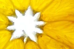 Detalle anaranjado Fotografía de archivo libre de regalías