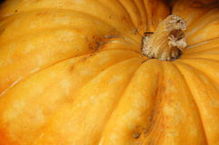 Detalle anaranjado de la calabaza Imagen de archivo