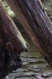 Detalle caido de los árboles con la cara de la roca fotos de archivo