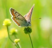 Detalle colorido de la mariposa Fotografía de archivo libre de regalías