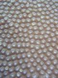Detalle - coral duro Imagenes de archivo