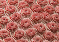 Detalle coralino Imágenes de archivo libres de regalías