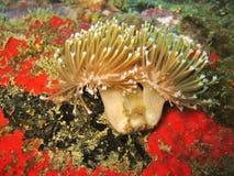 Detalle coralino suave de la flor Imagenes de archivo