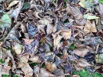 Detalle de Autumn Leaves - fondo Fotos de archivo