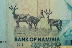Detalle de 10 dólares namibianos de billete de banco Fotos de archivo libres de regalías