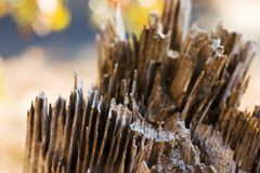 Detalle de descomposición del tocón de árbol Imagenes de archivo
