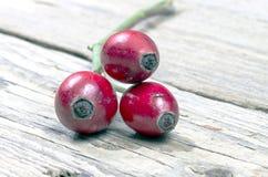 Detalle de escaramujos rojos Imagen de archivo libre de regalías