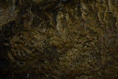 Detalle de Frosty Dewdrops In Grass Mineral en el parque nacional de Yellowstone Imagenes de archivo