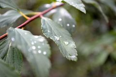 Detail of water drop on green leaf. Photograph taken with macro a rainy day Royalty Free Stock Photo