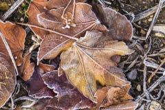 Detalle de hojas con escarcha fotos de archivo