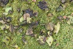 Detalle de hojas con escarcha imagen de archivo libre de regalías