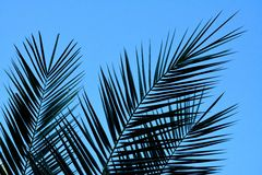 Detalle de hojas de palma Imagen de archivo