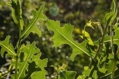 Detalle de hojas en el exterior a hacer excursionismo imagenes de archivo