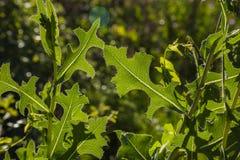 Detalle de hojas en el exterior a hacer excursionismo fotos de archivo libres de regalías