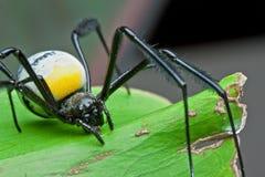 Detalle de la araña imagen de archivo libre de regalías