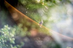 Detalle de la araña en web Imagenes de archivo