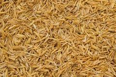 Detalle de la cáscara del arroz para el fondo Foto de archivo libre de regalías