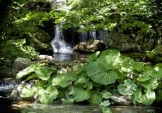 Detalle de la cascada foto de archivo libre de regalías