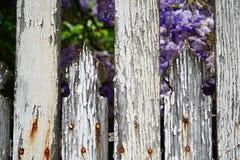 Detalle de la cerca de madera blanca descolorada vieja con los clavos que aherrumbran Foto de archivo
