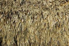 Detalle de la choza de Tiki. Fotografía de archivo libre de regalías