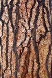 Detalle de la corteza de árbol Imagen de archivo