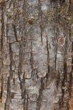 Detalle de la corteza de árbol de pino en formato vertical Fotos de archivo libres de regalías