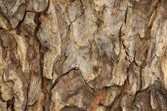Detalle de la corteza de árbol, fondo abstracto Foto de archivo libre de regalías