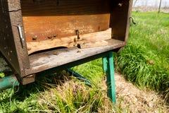 Detalle de la entrada de la casa de abejas foto de archivo