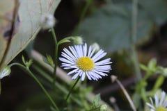 Detalle de la flor fotografía de archivo libre de regalías