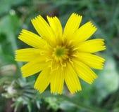 Detalle de la flor Imagenes de archivo