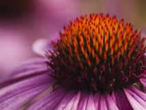 Detalle de la flor Foto de archivo libre de regalías