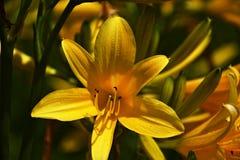 detalle de la flor Imagen de archivo libre de regalías