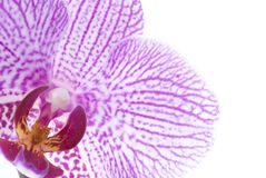 Detalle de la flor aislado en blanco Fotos de archivo