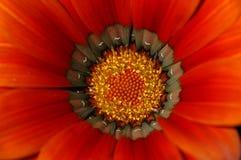 Detalle de la flor salvaje. Imagen de archivo