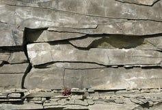 Detalle de la formación de roca de la pizarra Imágenes de archivo libres de regalías
