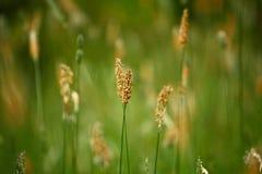 Detalle de la hierba Fotografía de archivo libre de regalías