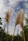 Detalle de la hierba Fotografía de archivo
