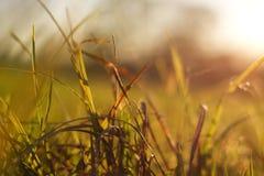 Detalle de la hierba Imagenes de archivo