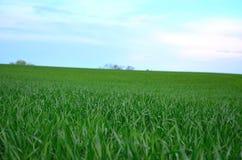 Detalle de la hierba con el cielo azul fotografía de archivo