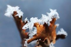 Detalle de la hoja del hielo del invierno Fotos de archivo