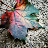 Detalle de la hoja del otoño Foto de archivo libre de regalías