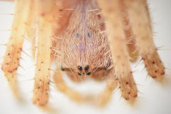 Detalle de la macro de la araña Fotografía de archivo libre de regalías
